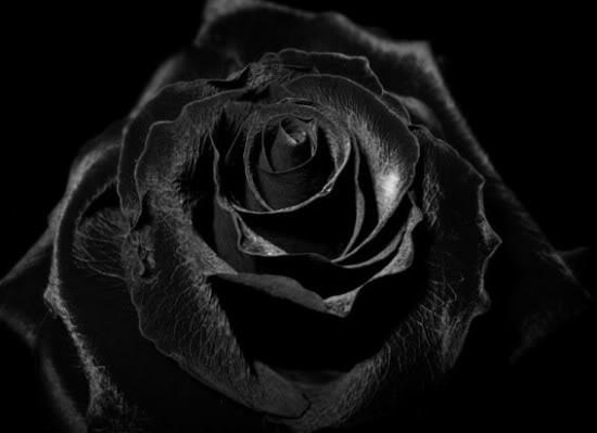 pkebasement-black-flowers-roses-Ros